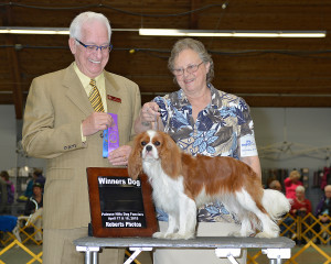 Dusty, Cavalier King Charles Spaniel with owner Glenda Jones